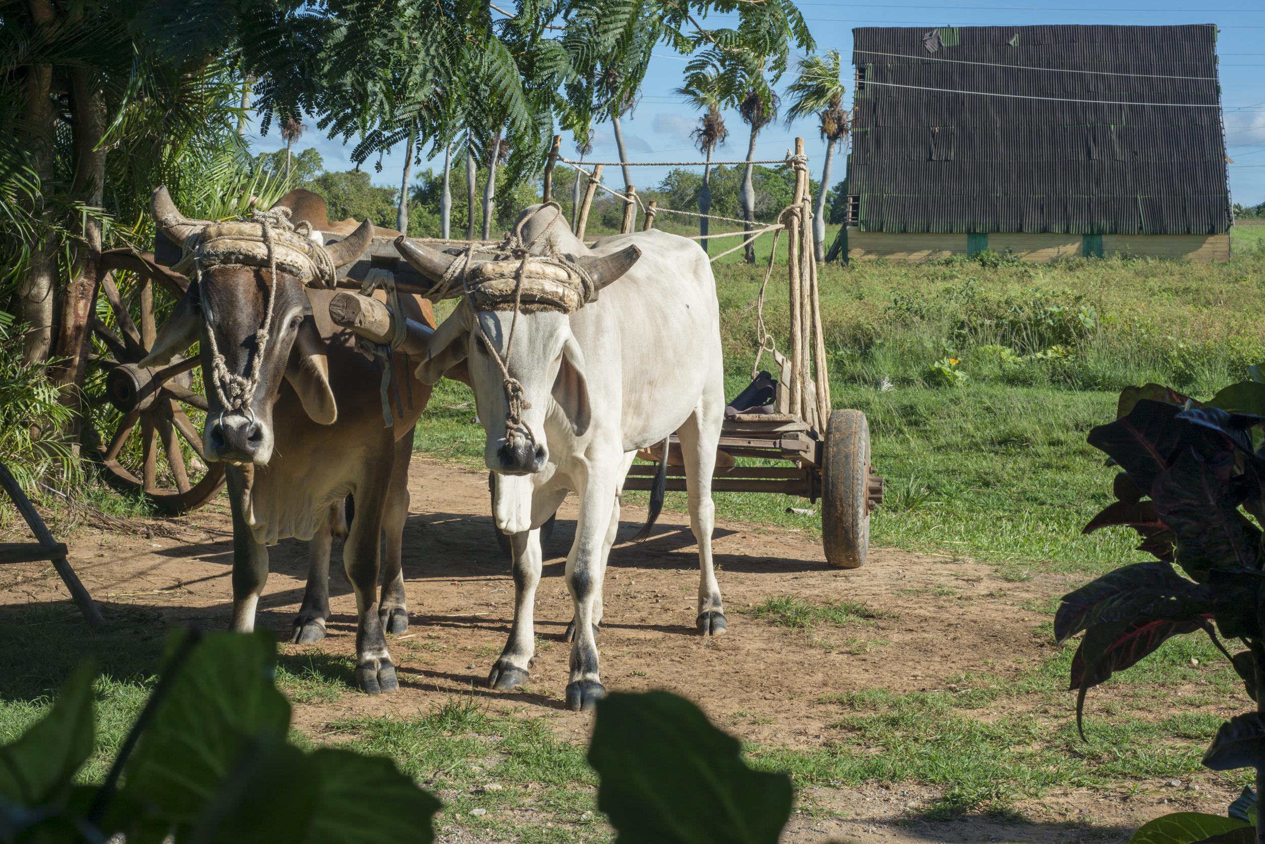 Cuba-6271.jpg