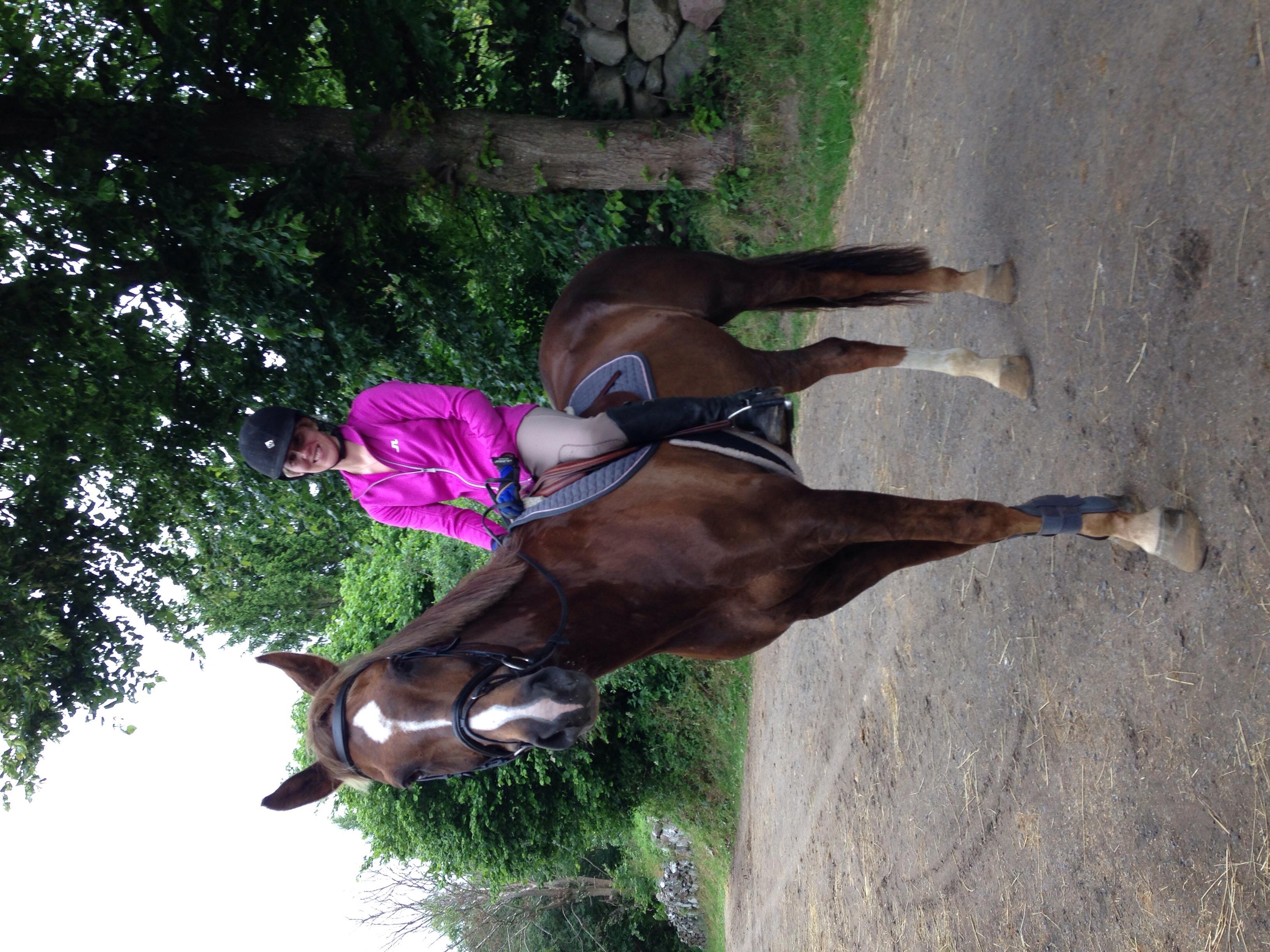 Ny häst som är till salu, en läromästare som gått 1,45