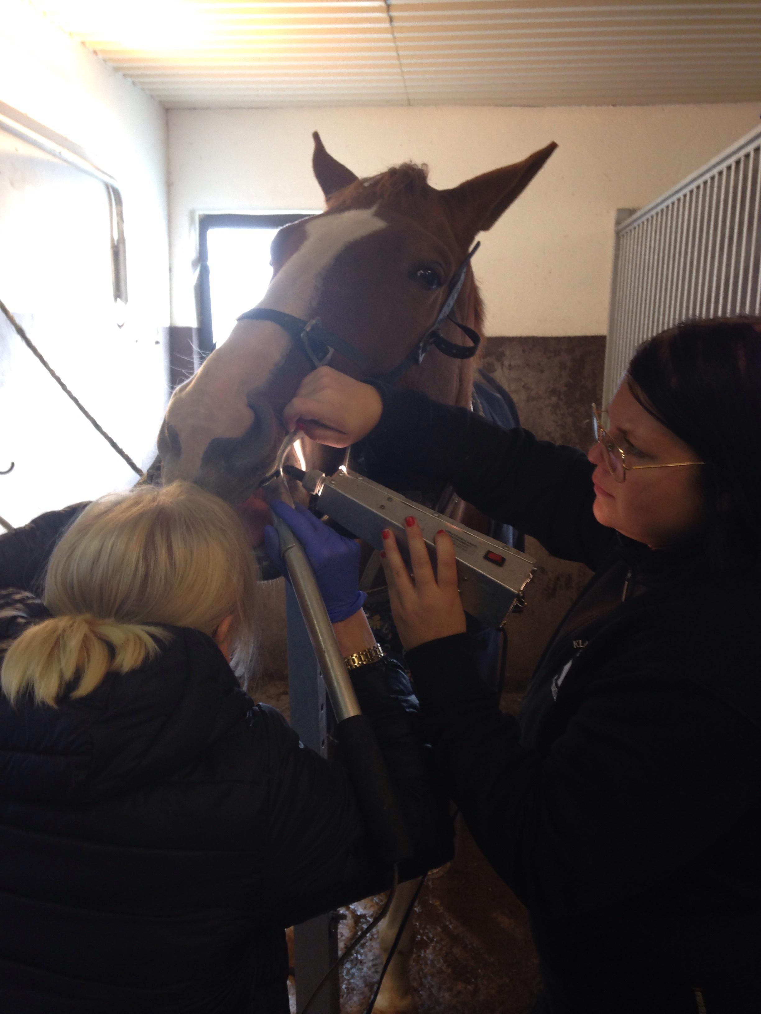Lina från Klagstorps hästpraktik är grym på tänder