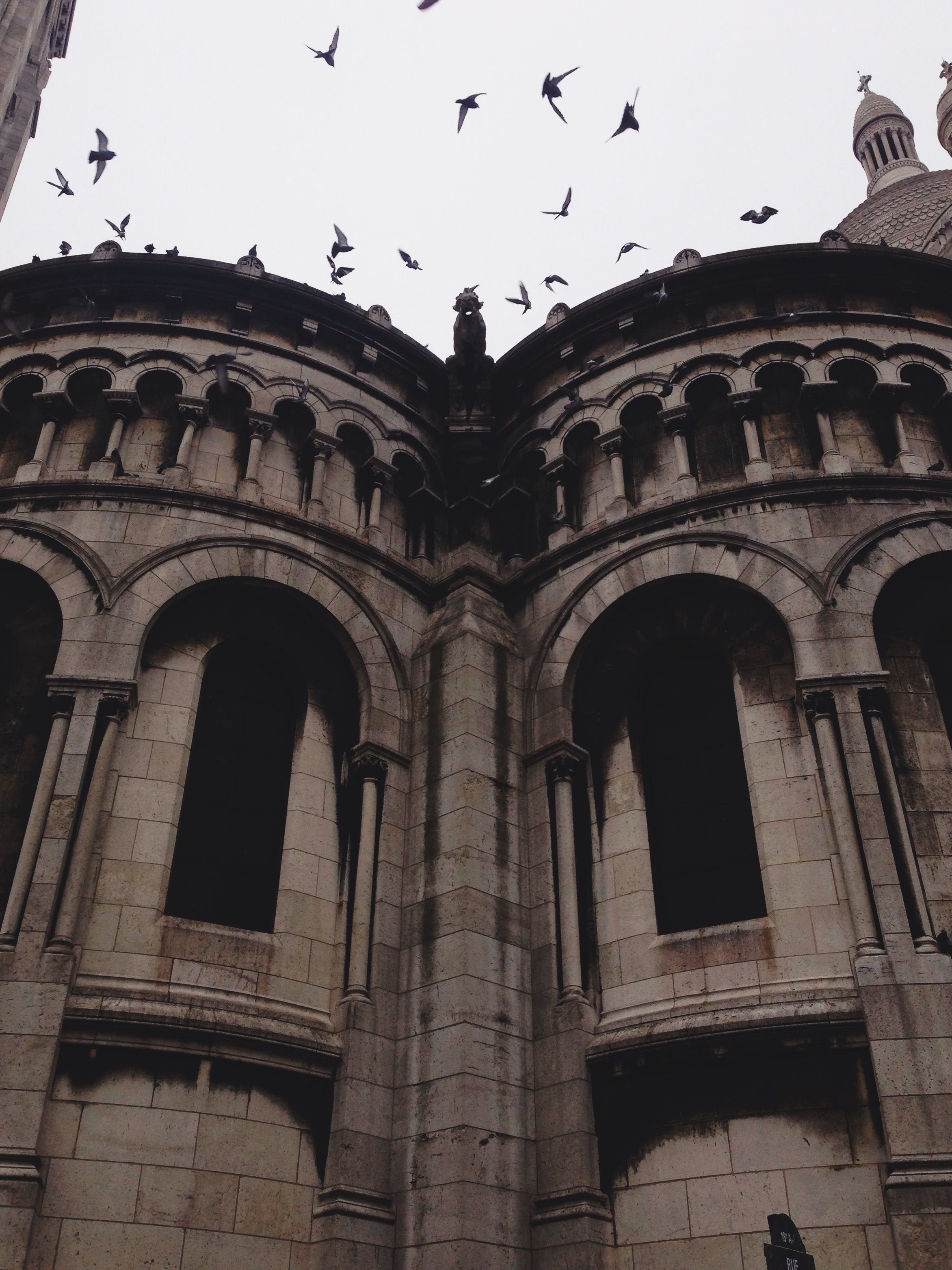 paris-birds_over_sacre_coeur