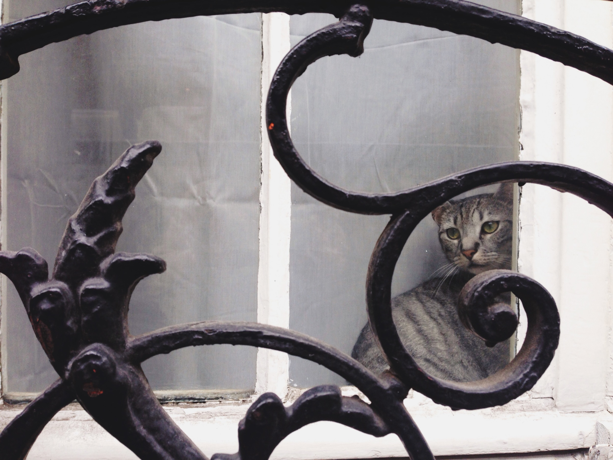 paris-le_chat_en_paris_part_one
