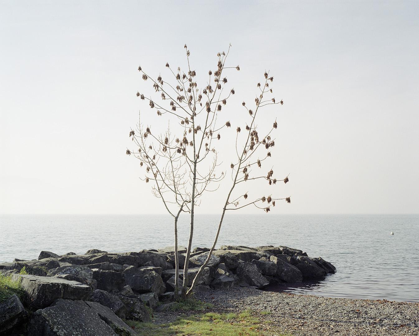 arbre_bizzarre.jpg