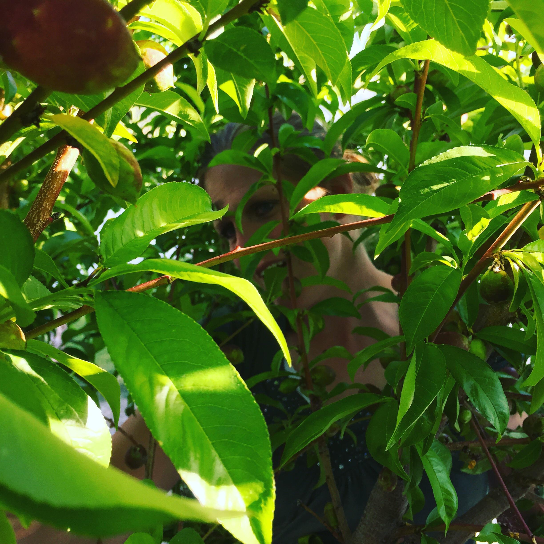 Marathon Girl hiding in the nectarine tree.