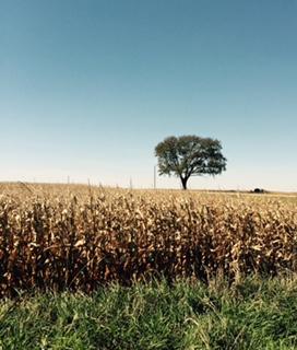 pre harvest field.jpg