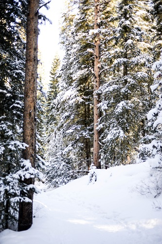 Photo: Gallatin National Forest, south of Bozeman, MT.