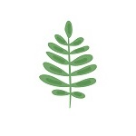 fern leaf_150_upright.jpg