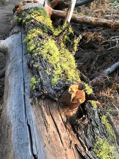 fallen tree_400.jpg