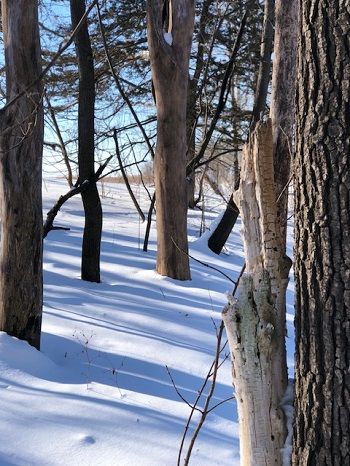 Winter stillness, Iowa