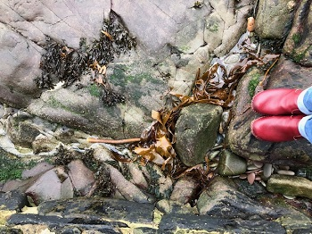 power of seaweed_350.jpg