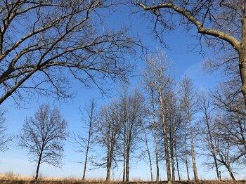 april trees and skies_350.jpg