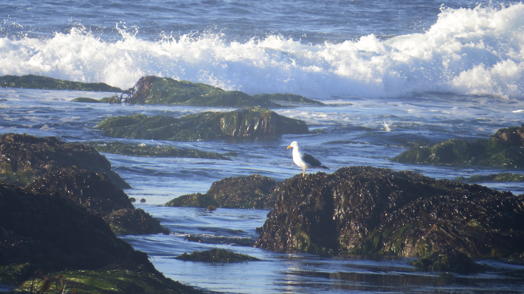 Photo taken at Asilomar Conference Grounds in Monterey, California