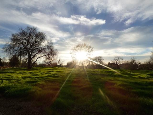 Picture taken Near Sacramento River in South Natomas.