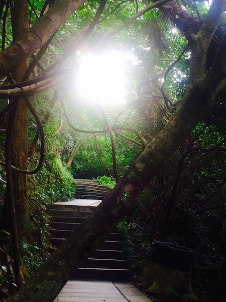 This scene from Wutong Shan, a mountain preserve in Shenzen appears to open a portal to another dimension. The shortest distance between two points is being there!