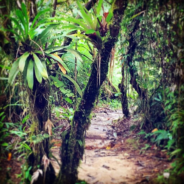 Peace is walking through this... #compassioning #rainforest #nature #travelgram #travelislife #trekking #keepitwild #livingyoga #mindbodycenteringyoga