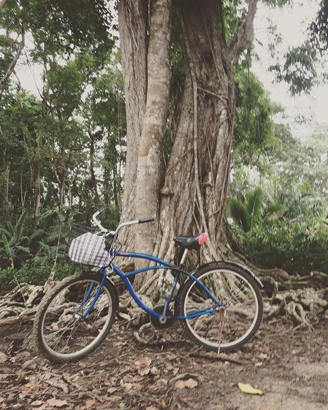#biketraveling #cruiserbike #jungletrail #costarica #puravida #keepitwild #bikewanderer #compassioning #yogilife