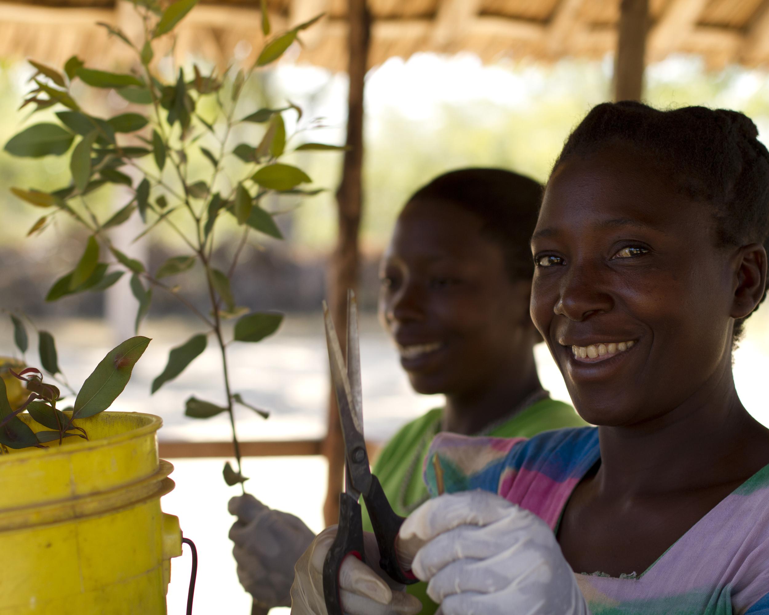 farmers planting 2.jpg