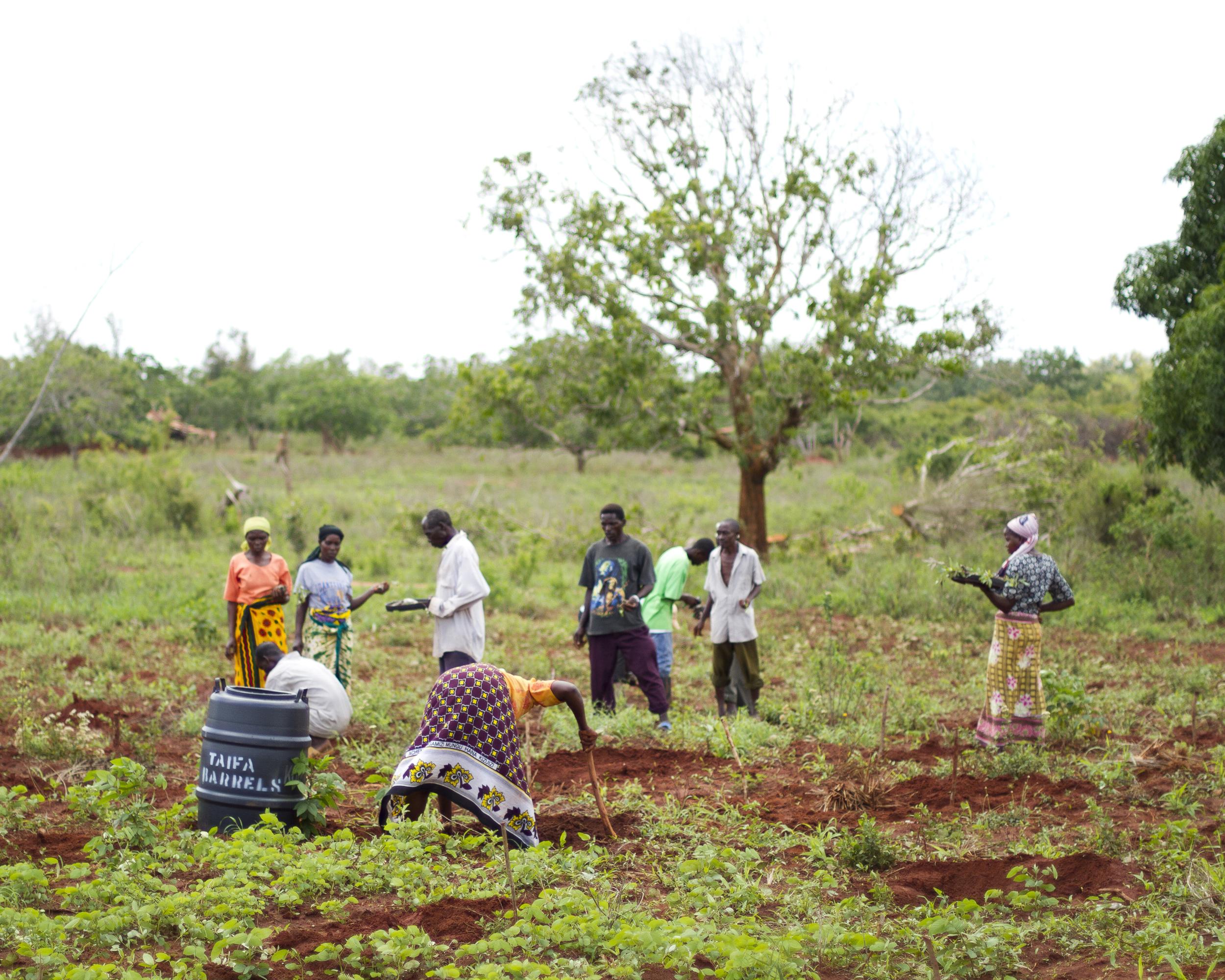 Planting Groups.jpg