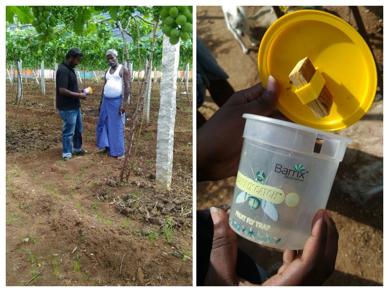 Grape farmer learning about Essmart fruit fly traps.jpg