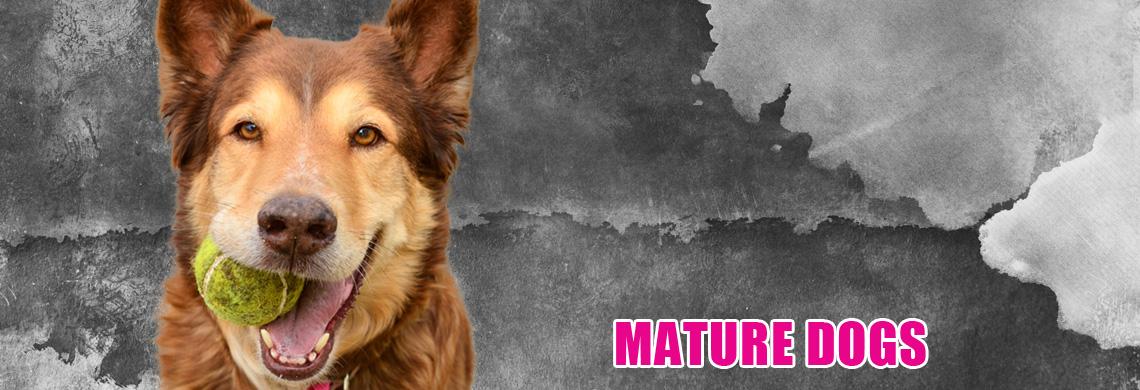mature-dogs.jpg