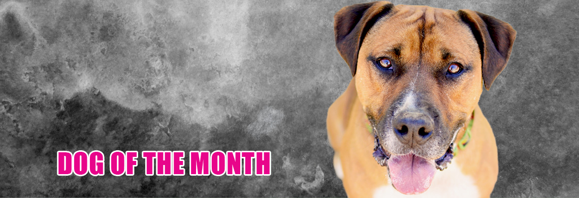 dog-of-the-month.jpg