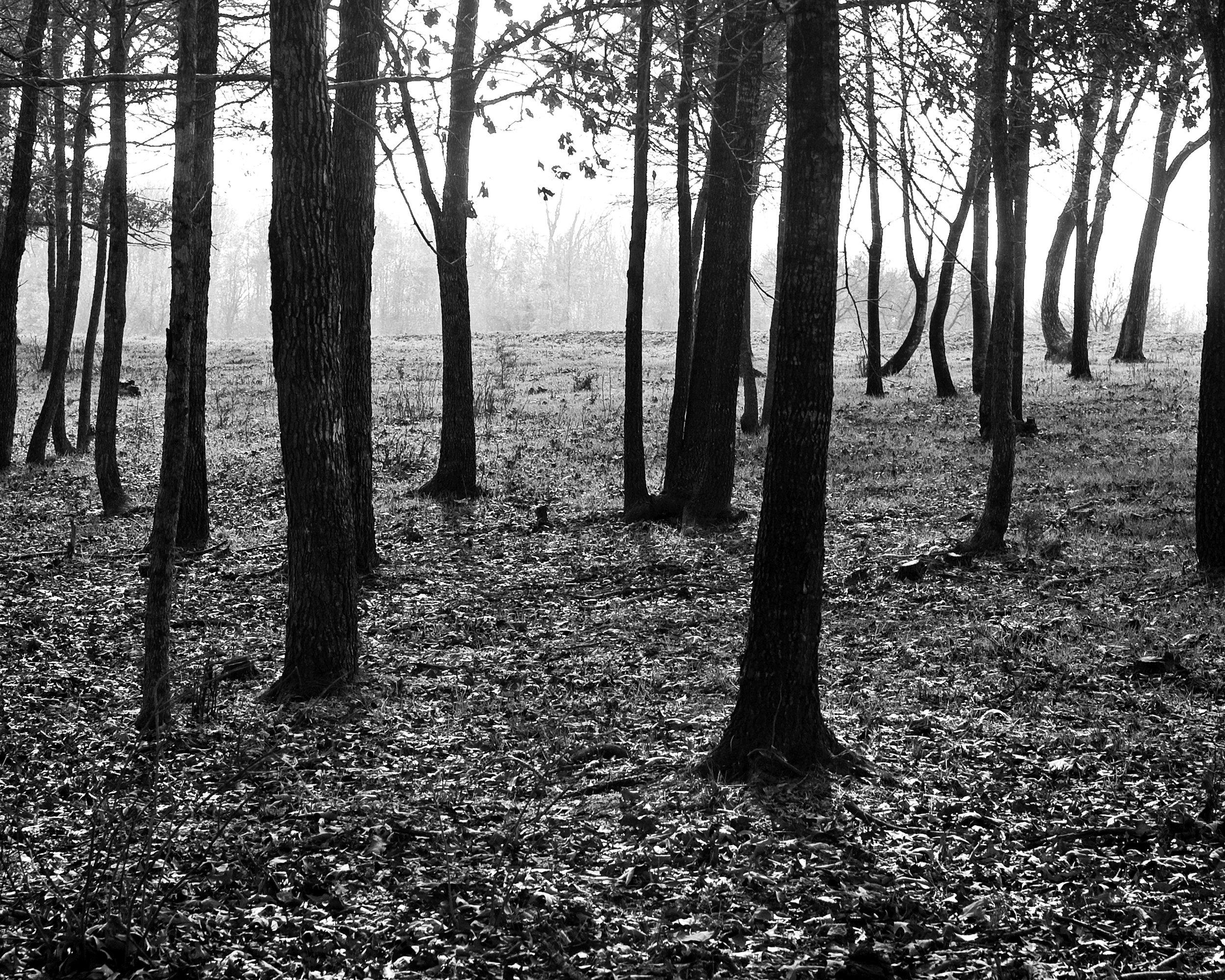 trees8x10.jpg