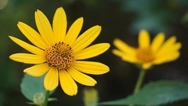 #awalkaroundthelake #columbiareservation #clevelandmetroparks #sonya6000 #sonya6000club #closeupphotography @sonycameraclub  #clevelandartist #cle #wildflowers
