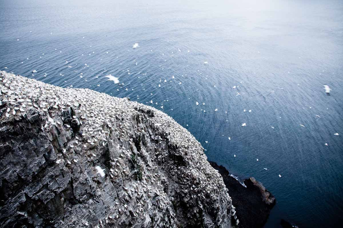 01 Newfoundland-11.jpg