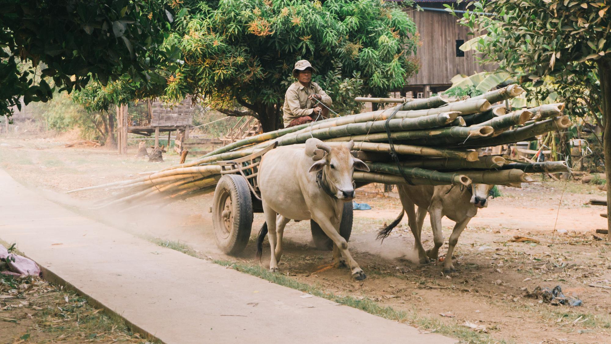 Cambodia_WEB_Preview-185.jpg