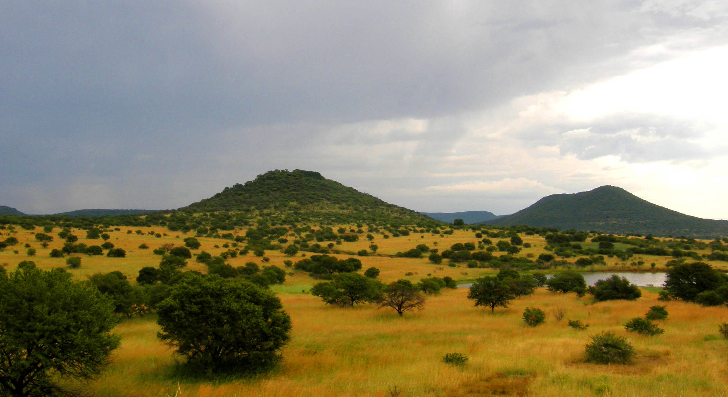 The cradle of humankind: the plains of Africa. Image © Gossipguy; retrieved from  Wikimedia