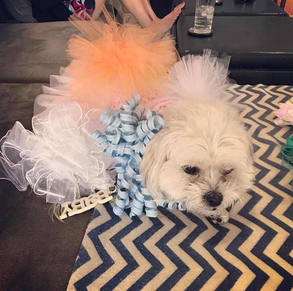 Dr. Crespi's dog Peaches loved all the bows at the party!