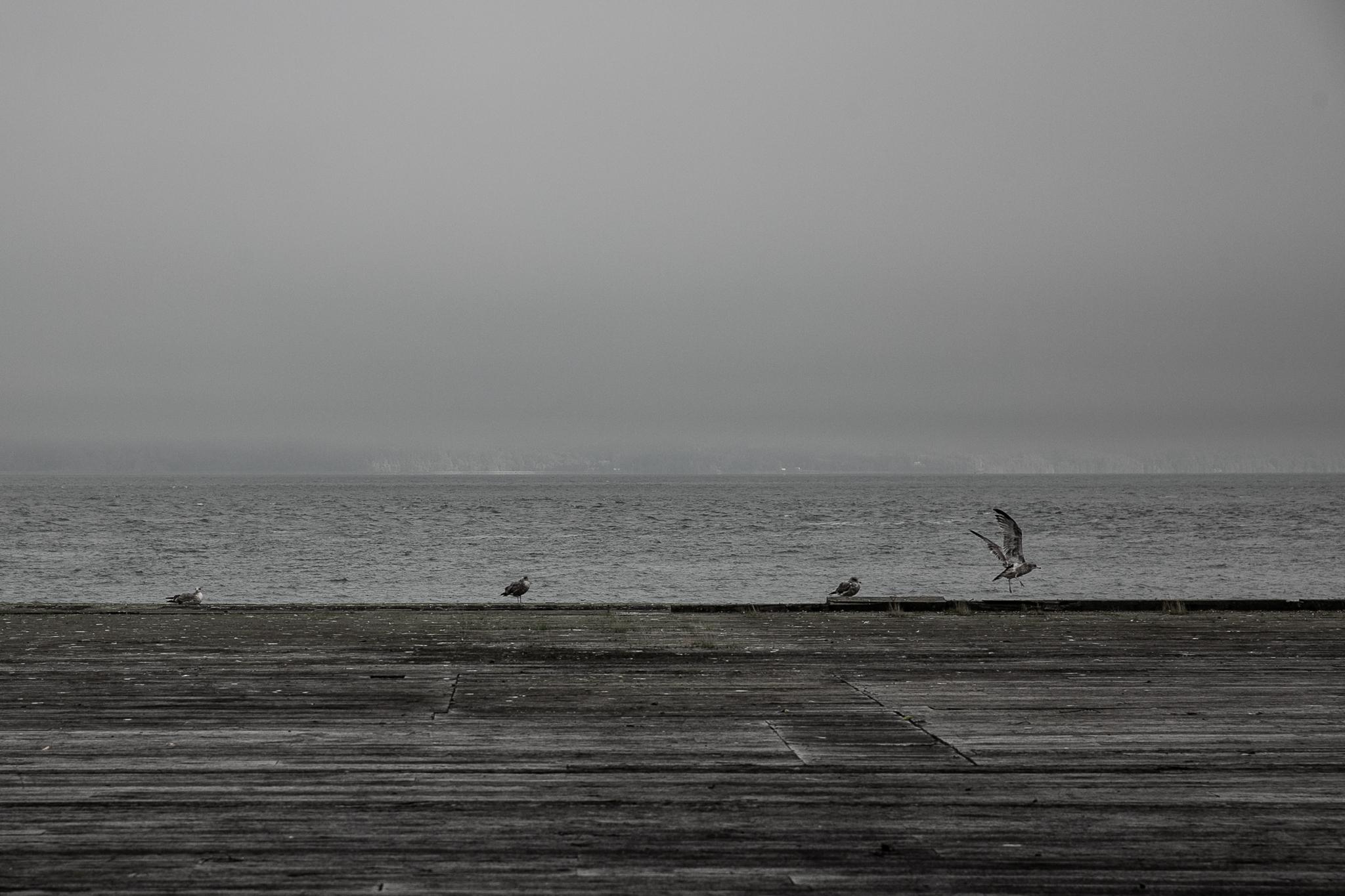 astoria birds-1.jpg
