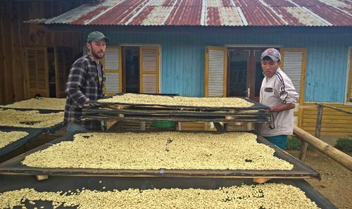 Joshua phơi nhân cà phê theo phương pháp thủ công nhằm đảm bảo chất lượng tốt nhất cho sản phẩm.