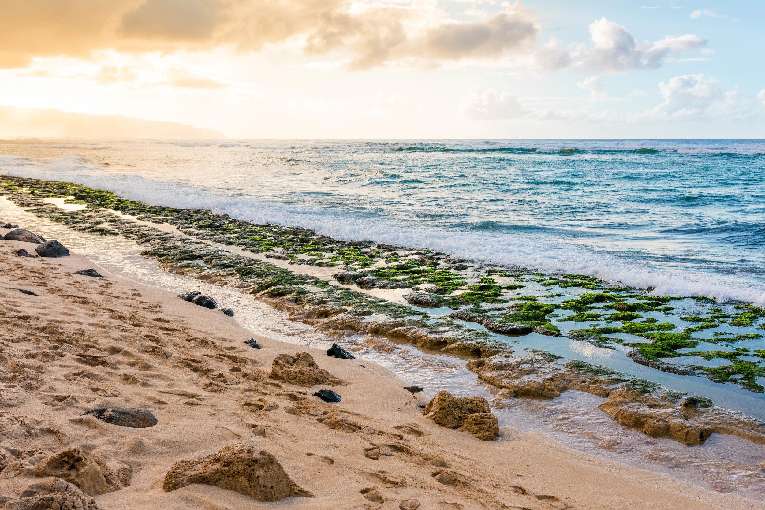 """Turtle Beach"", Laniakea Beach, North Shore, Oahu 2015"