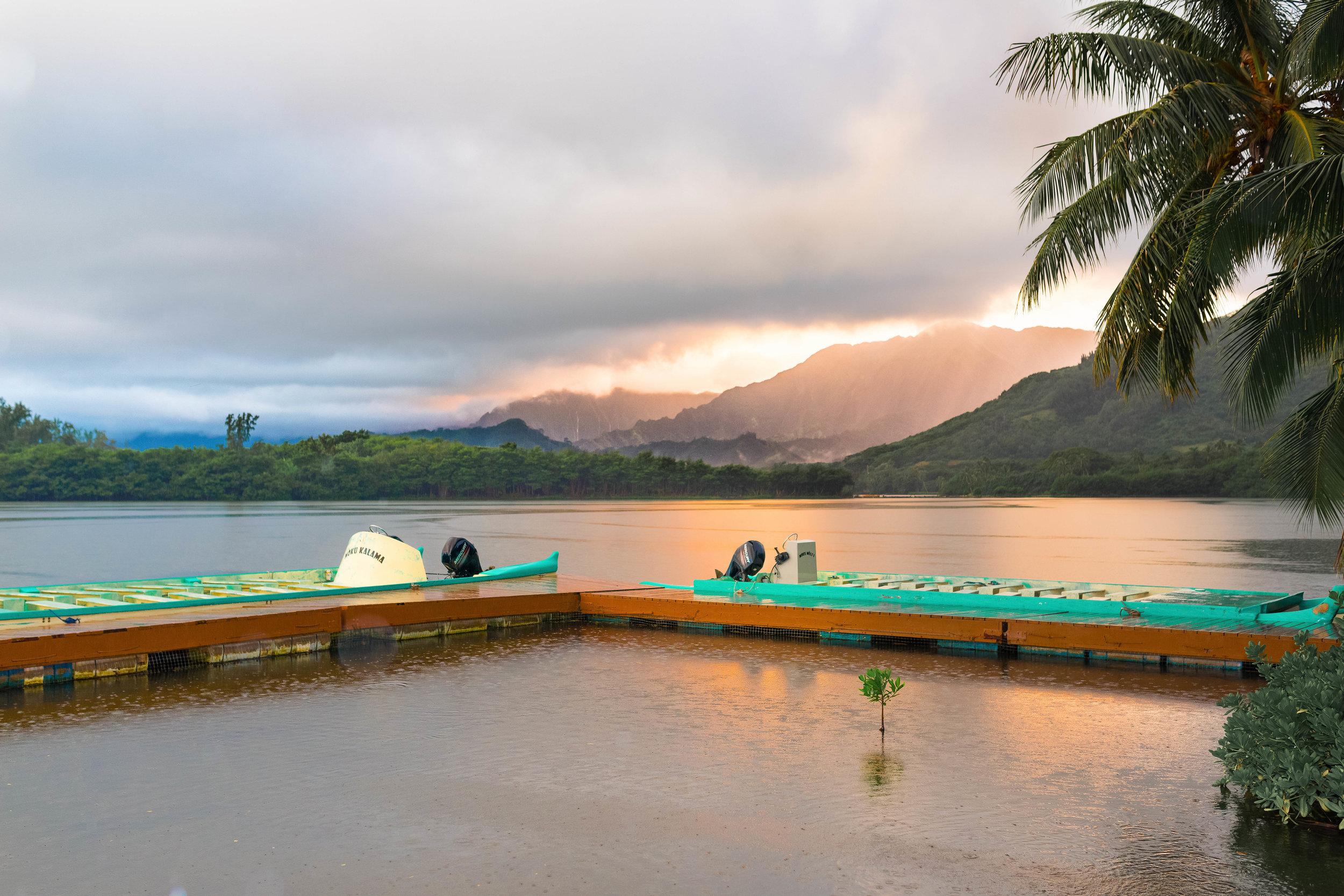 Moli`i Gardens, Oahu
