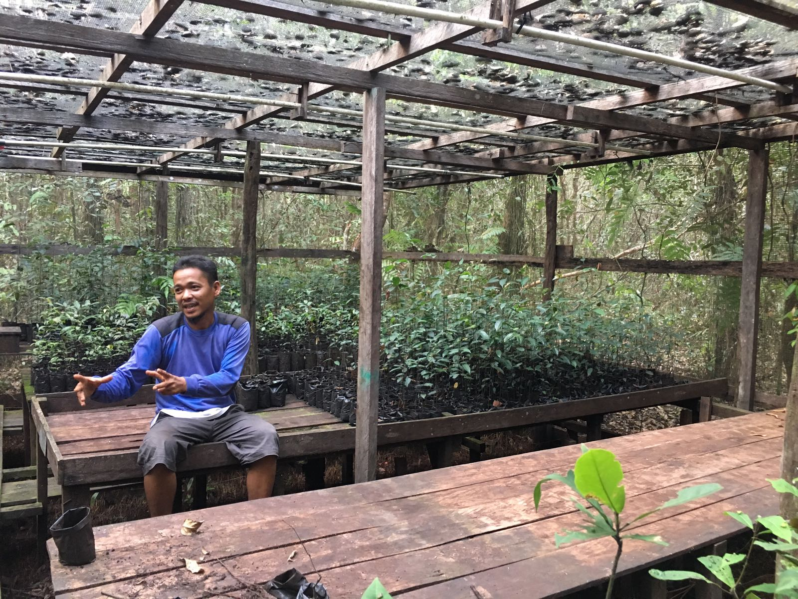Hendri from BNF explains how the different species used in restoration efforts, are collected and looked after in the nursery.