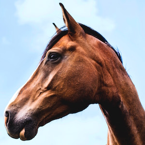 profile-portrait-horse-josephine-amalie-paysen-unsplash.jpg