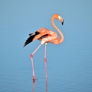 flamingo-alejandro-contreras-unsplash.jpg