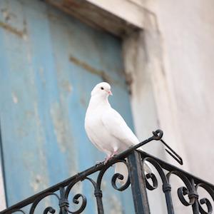 white-dove1-nadia71-pixabay.jpg