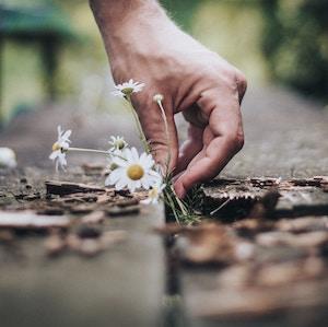 hand-picking-daisy-andrik-langfield-petrides-unsplash.jpg