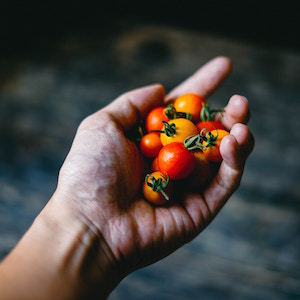 hand-holding-cherry-tomatoes-chinh-le-duc-unsplash.jpg
