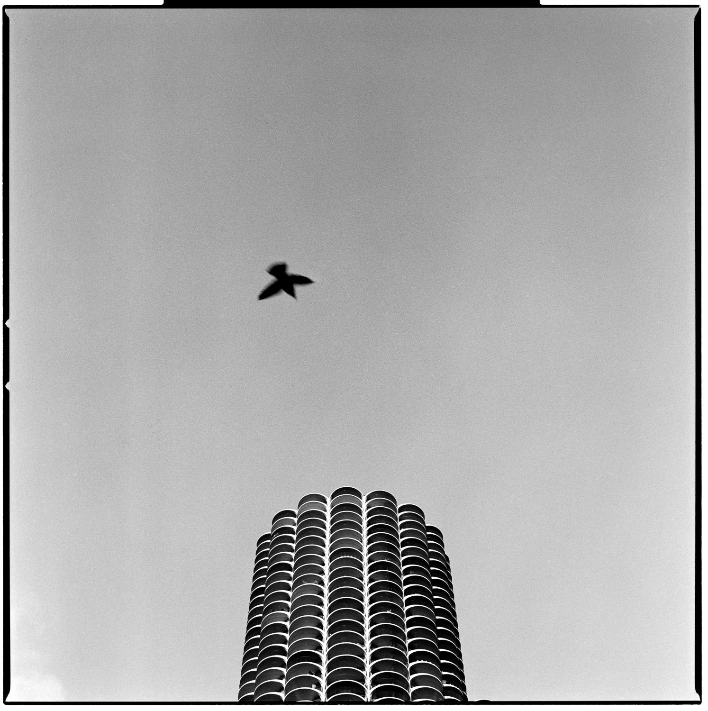 Bird By Marina Tower