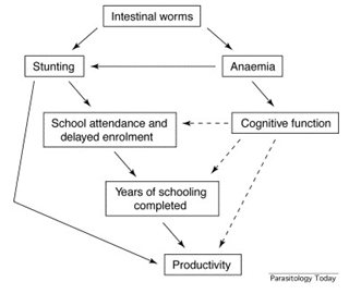 deworming diagram.png