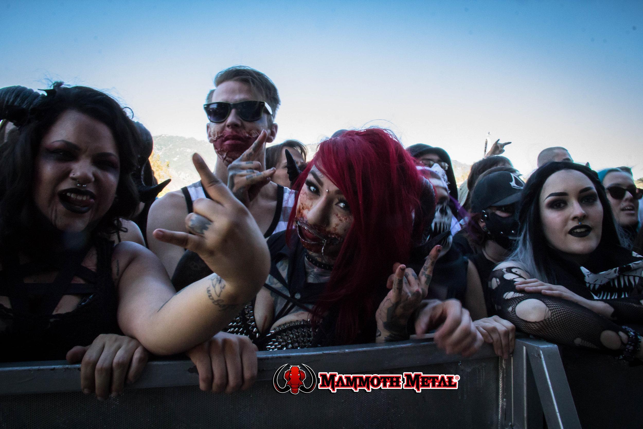 Metal rules  photo: David Burke
