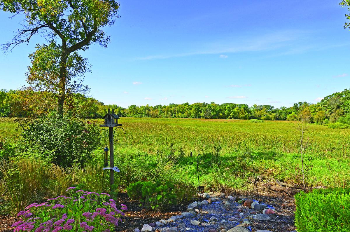 wetlands view.jpg