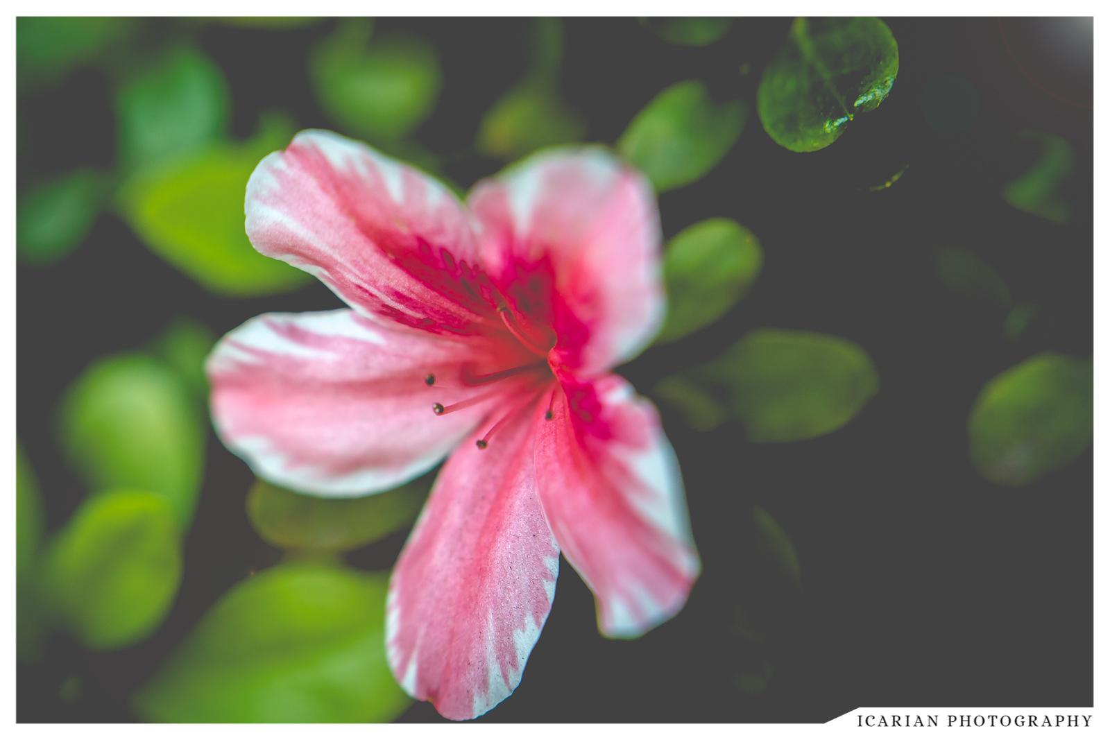 Icarian Photography Macro 2.jpg