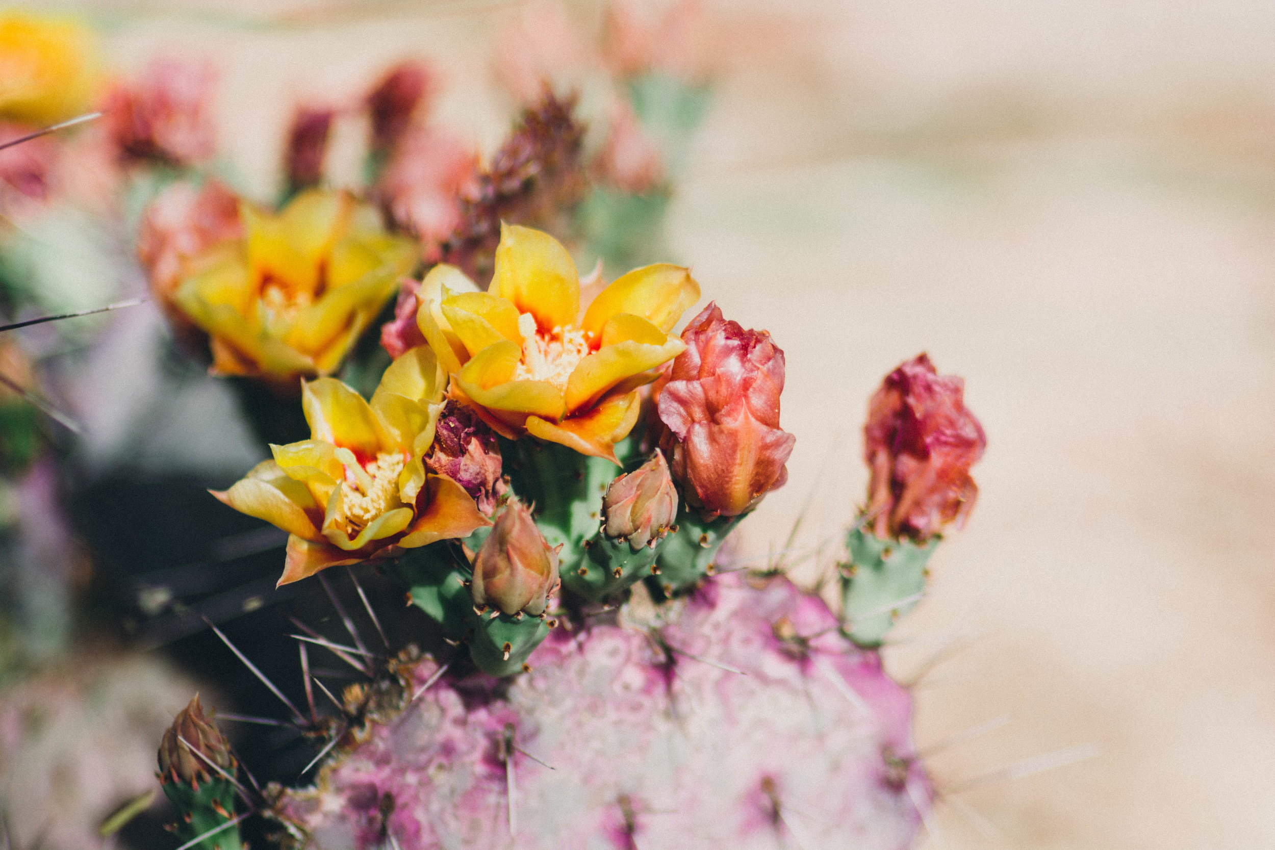"""""""  Thorns are modified leaves that allow cacti to survive in arid conditions. And just like those thorns, sometimes humans develop survival mechanisms to protect themselves from extreme circumstances. Some people are like cacti. Beautiful, delicate, resilient.  """""""