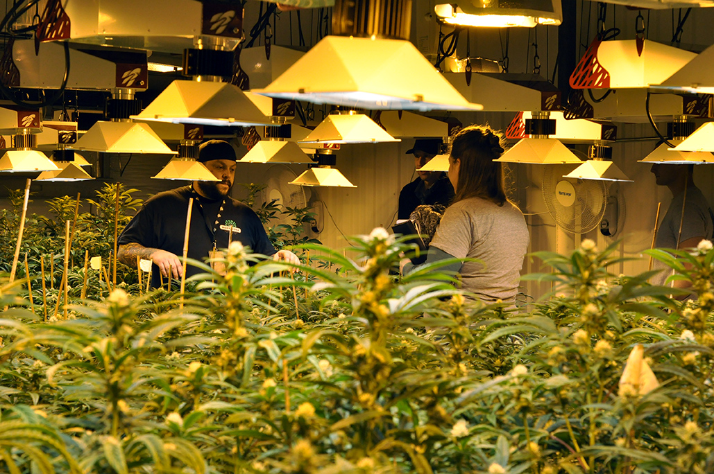 Rootworx-grow-marijuana.jpg