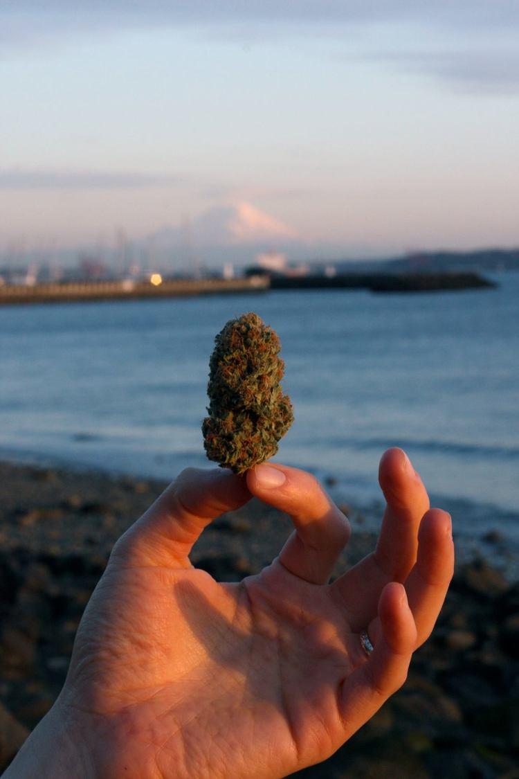APSUcannabis.jpg