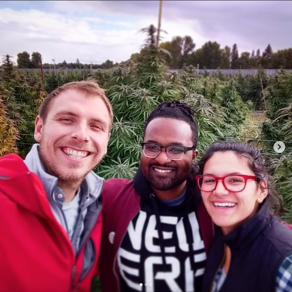 Heylo Cannabis Extracts visiting Puffin Farms to source high CBD cannabis strains to turn into their award winning cannabis oil.