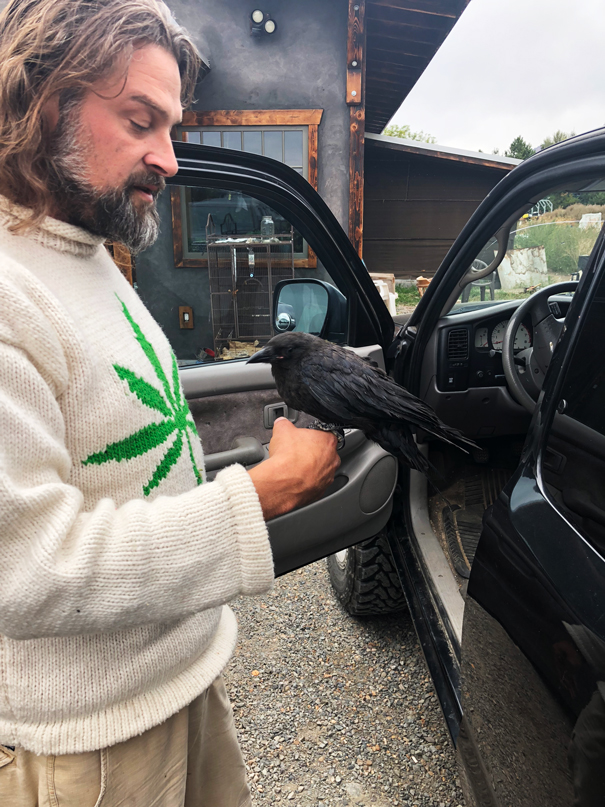 This injured crow is being fostered back to health by Lazy Bee's resident bird whisperer, Neil. At Lazy Bee there are truly good vibes present.